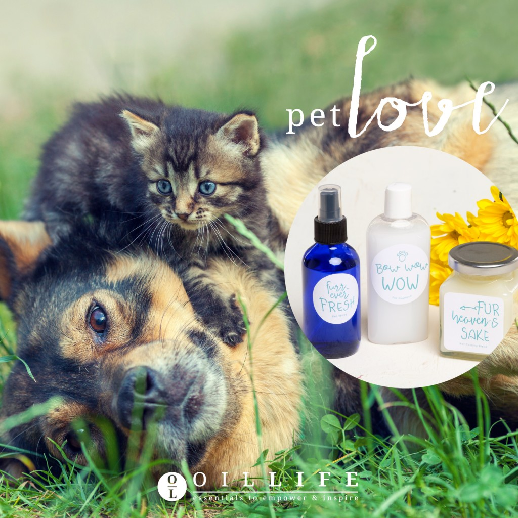 pet-diy-recipes